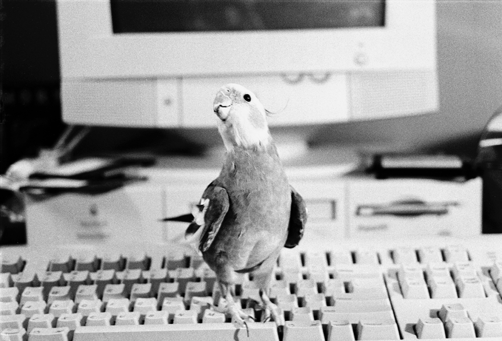 Bird on computer keyboard