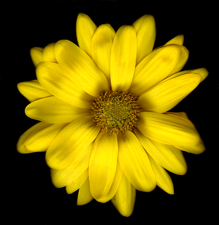 A Scan of a yellow flower